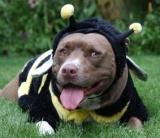 Bumblebee-suit