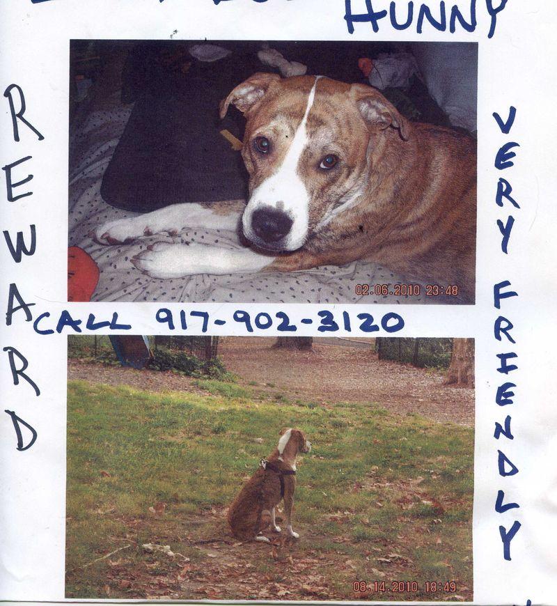Hunny missing